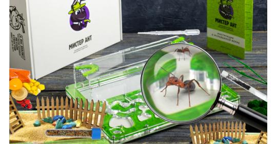 Микромир: что нужно, чтобы завести и содержать муравьев