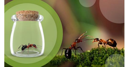 Я поймал муравья! Этого достаточно чтобы начать колонию?
