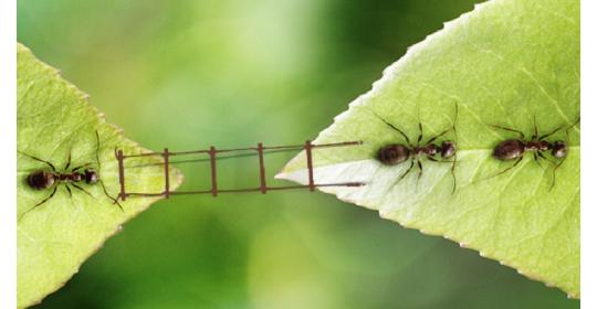 Собираем все необходимое, чтобы подготовить муравьиную ферму к заселению