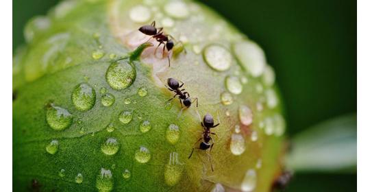 Первая муравьиная ферма: с чего начать, как кормить, как ухаживать