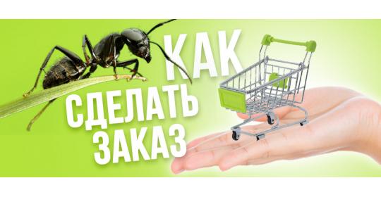 """Как сделать заказ в интернет-магазине """"Мистер Ант"""""""