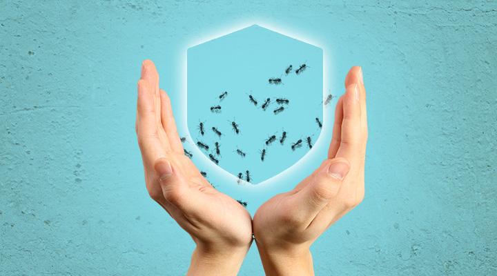 Как ухаживать за муравьиной фермой?