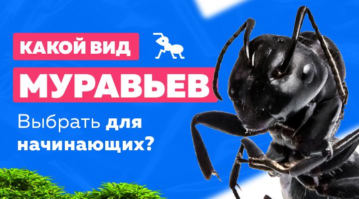 Какой вид муравьев подойдет для новичков?